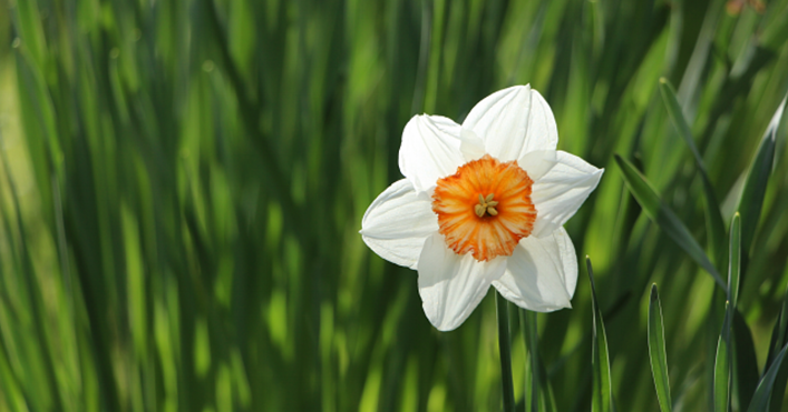 Spring-Flowers-305168-edited