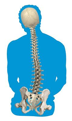 abnormal_curvature_of_the_spine_scoliosis.jpg