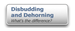 Disbudding and Dehorning