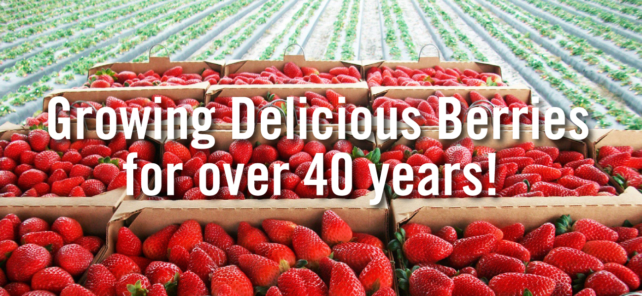 growing delicious berries for over 40 years