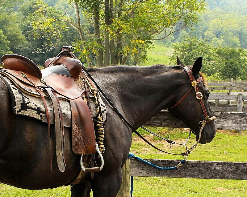 Top Tips for Starting and Running Your Own Horse Business