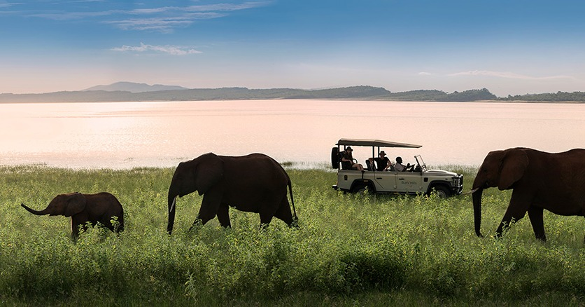 Bumi-Hills-Lake-Kariba-Zimbabwe-African-Bush-Camps--Banks-of-Lake-Kariba-elephants(30)-1