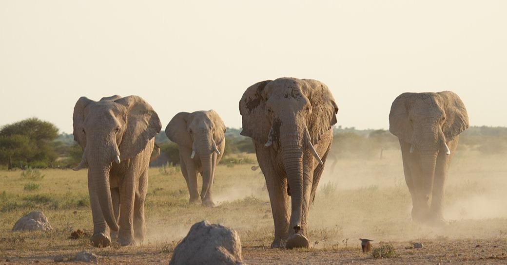 Migration-Expeditions-Nxai-Pan-Botswana-Shaun-Stanley-2015-(302)