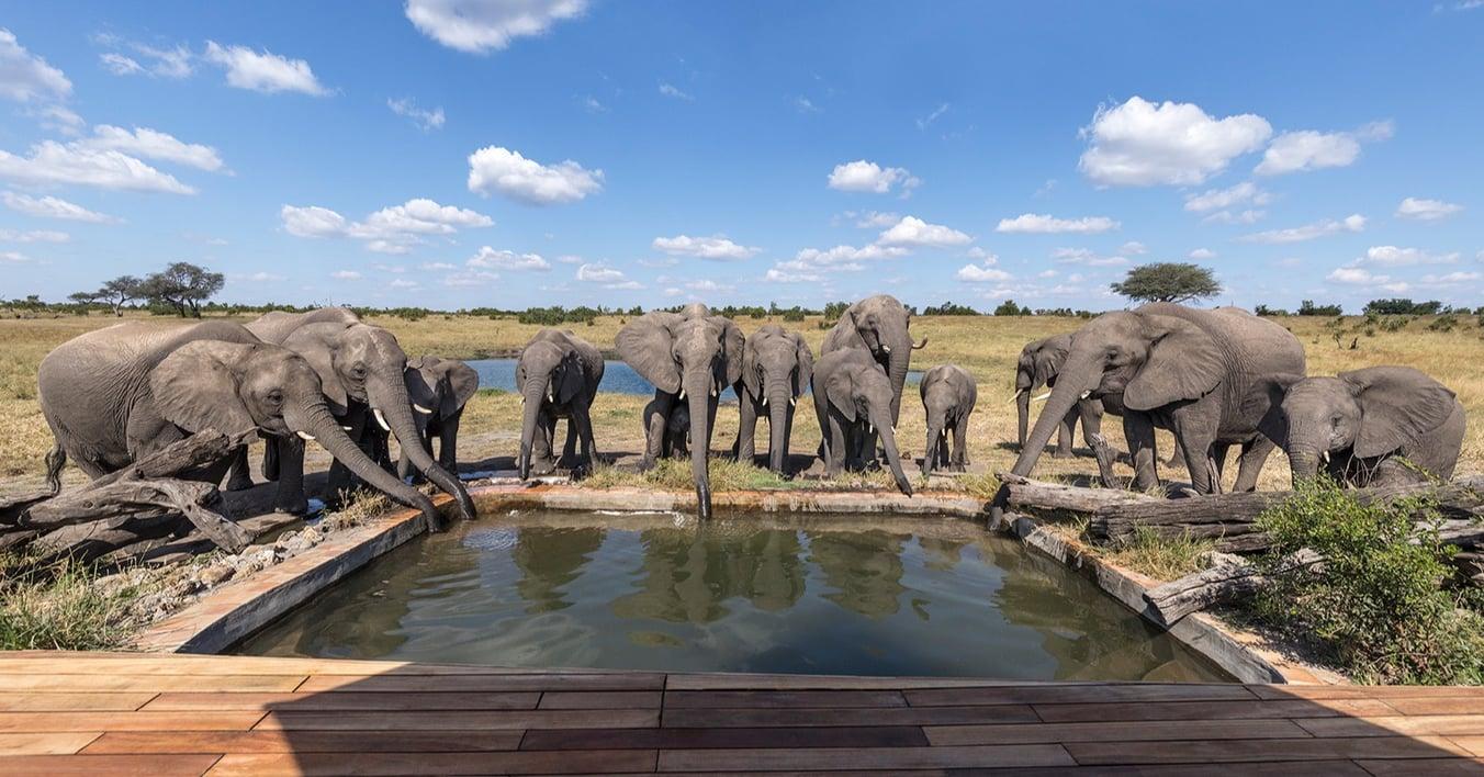 elephant-pool-somalisa