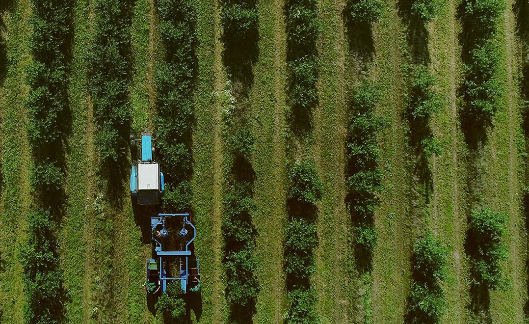 Berries-Drone-based-Aerial-Imagery