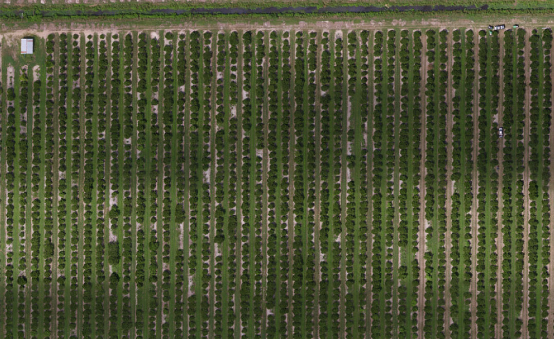 Citrus-Drone-based-Aerial-Imagery