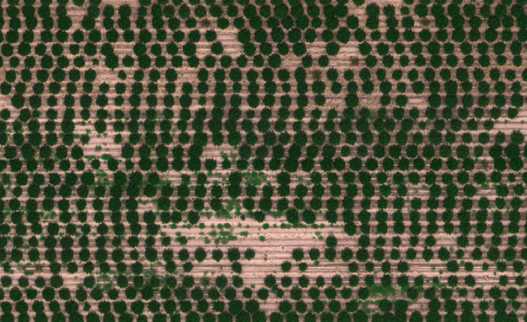 Hemp-Drone-based-Aerial-Imagery