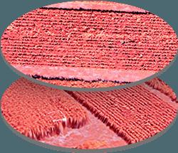 ortho-multispectral-sensor