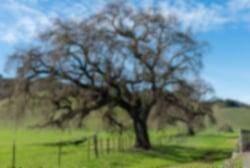 2-valley-oak-960x540-688137-edited