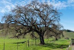 2-valley-oak-960x540-734369-edited