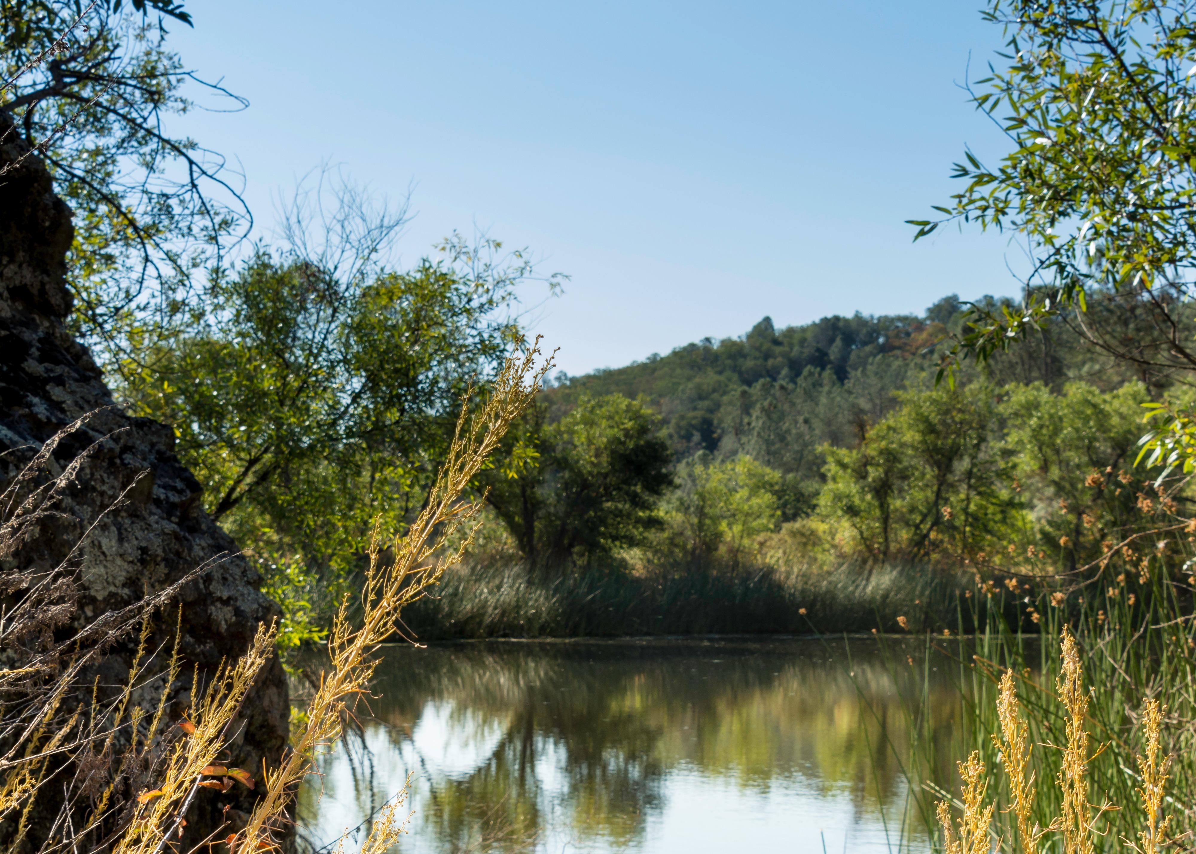 Little Uvas Creek