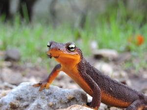 Amphibian - CS - 12-11-2014