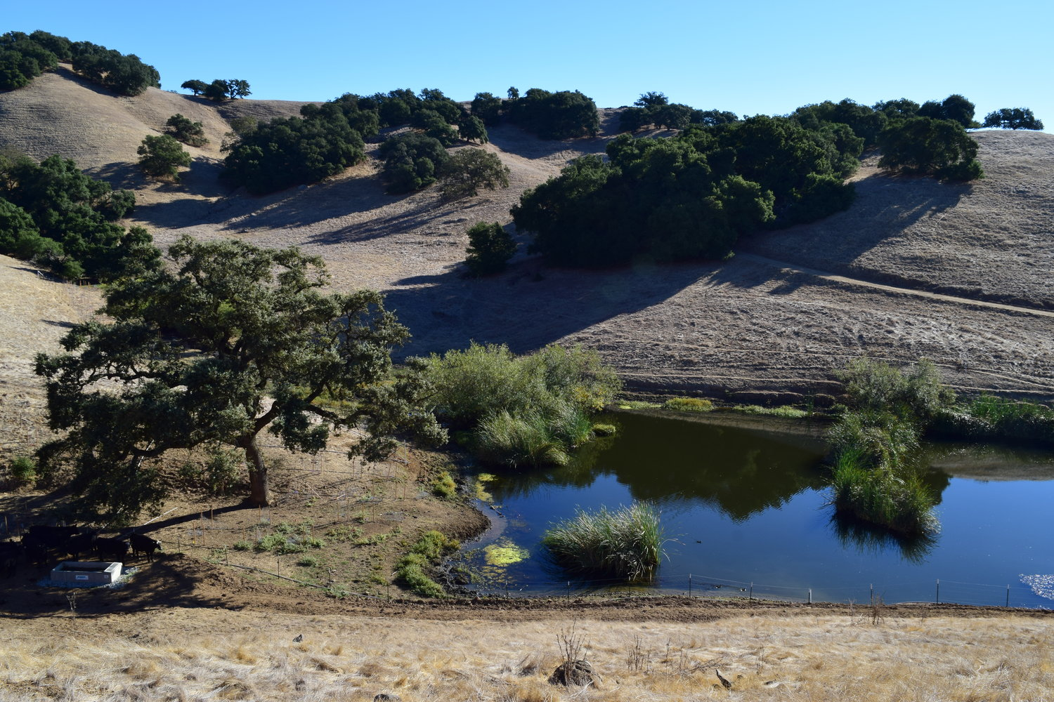 diablo-foothills-open-space-preserve