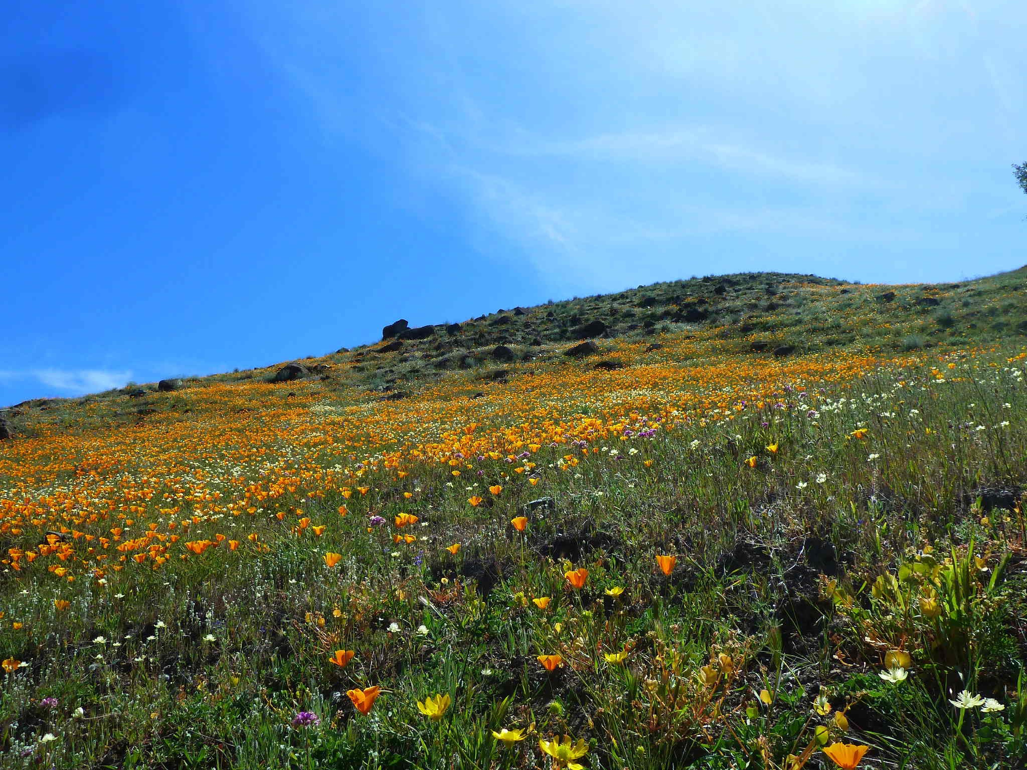 Rancho Canada del Oro - Blair Ranch - Wildflowers - CD - 05-01-2014