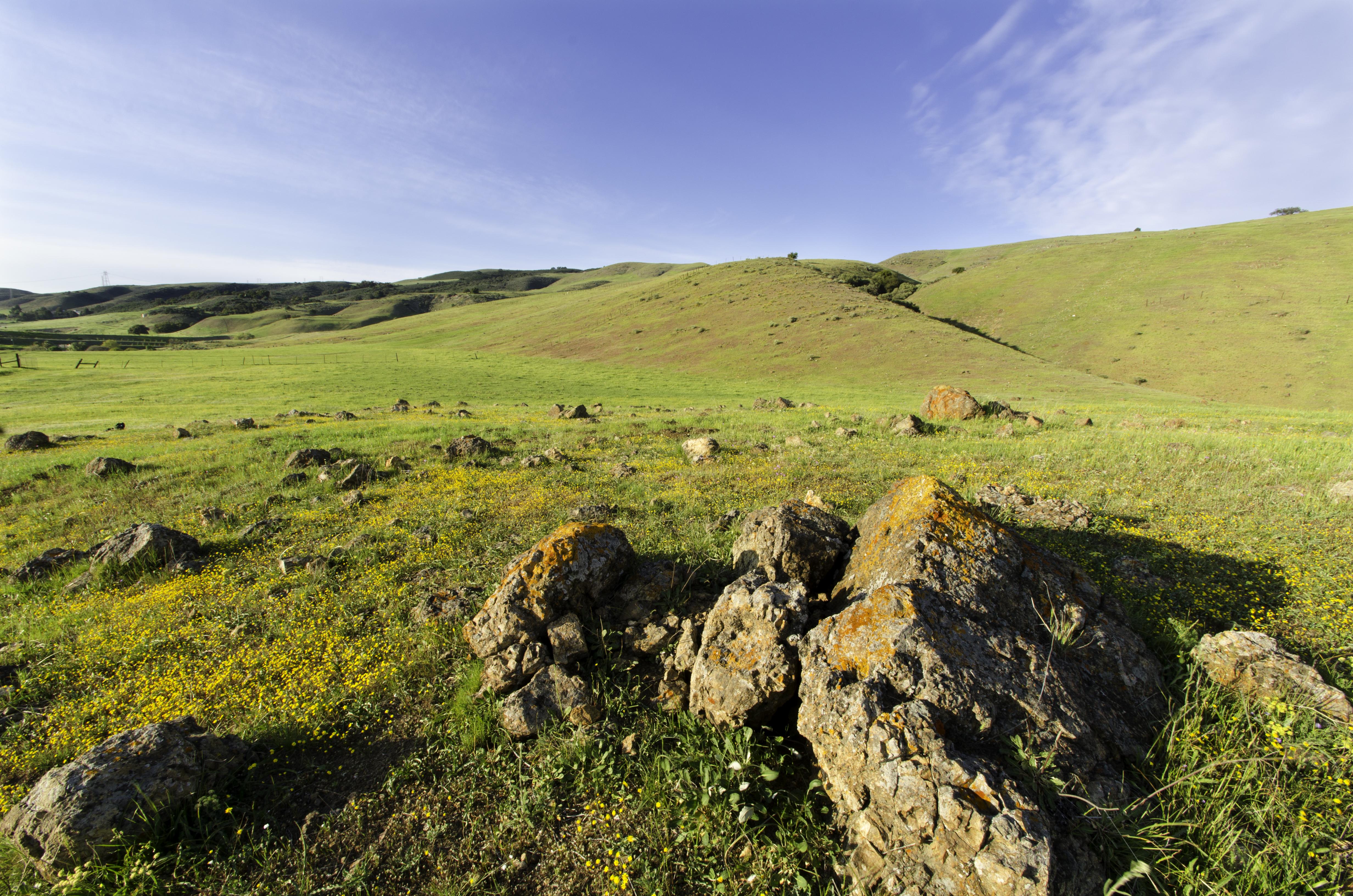 CRID - Landscape - D.Neumann - 03-16-13 - 13