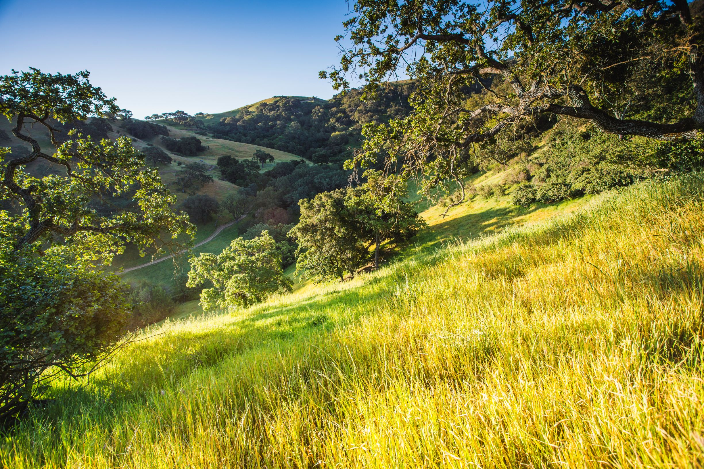 Coyote Valley Hillside