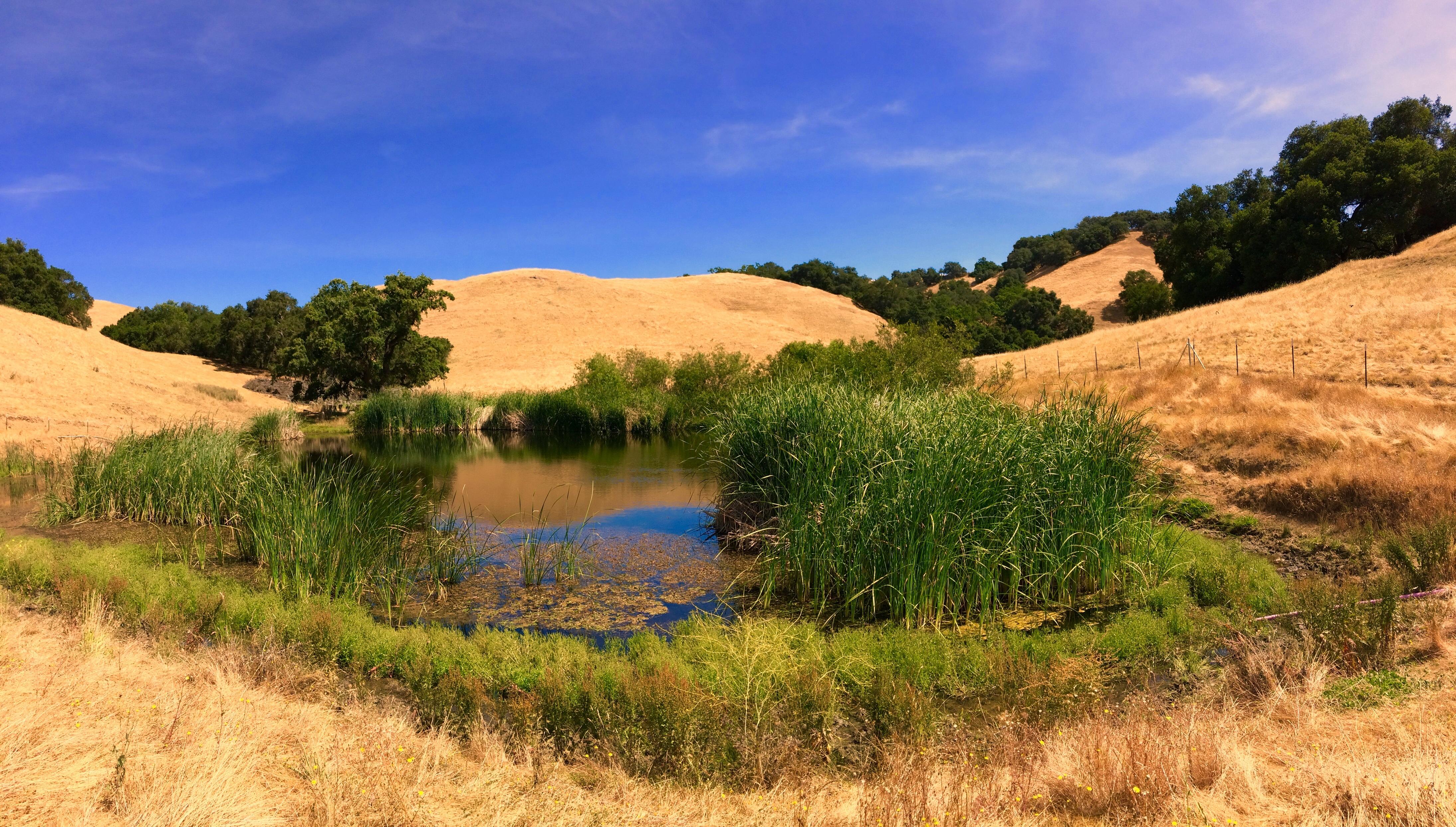 Diablo Foothills - Landscape - D.Mauk - May-10-2018