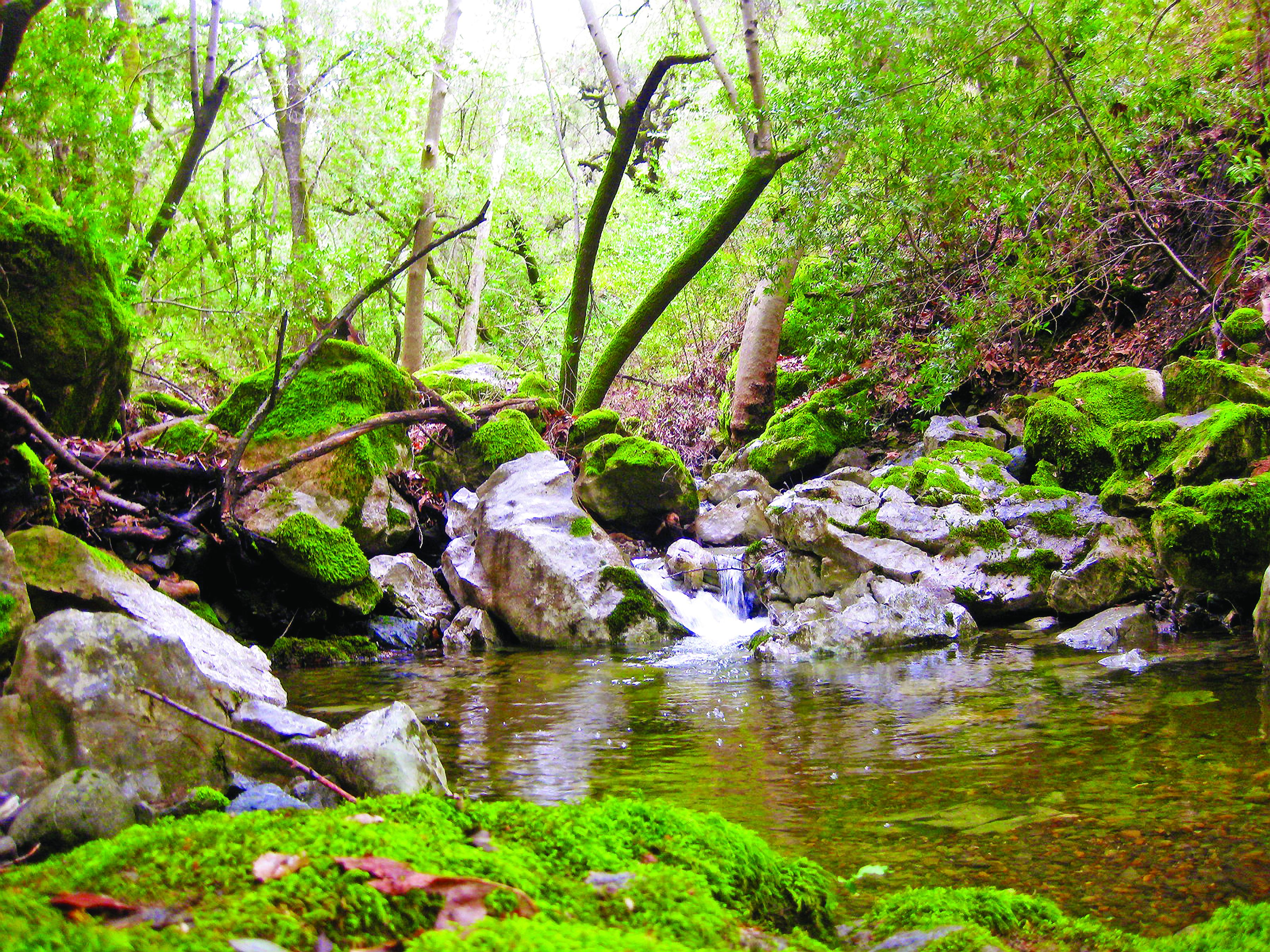 Llagas Creek Rancho GGS v2.jpg