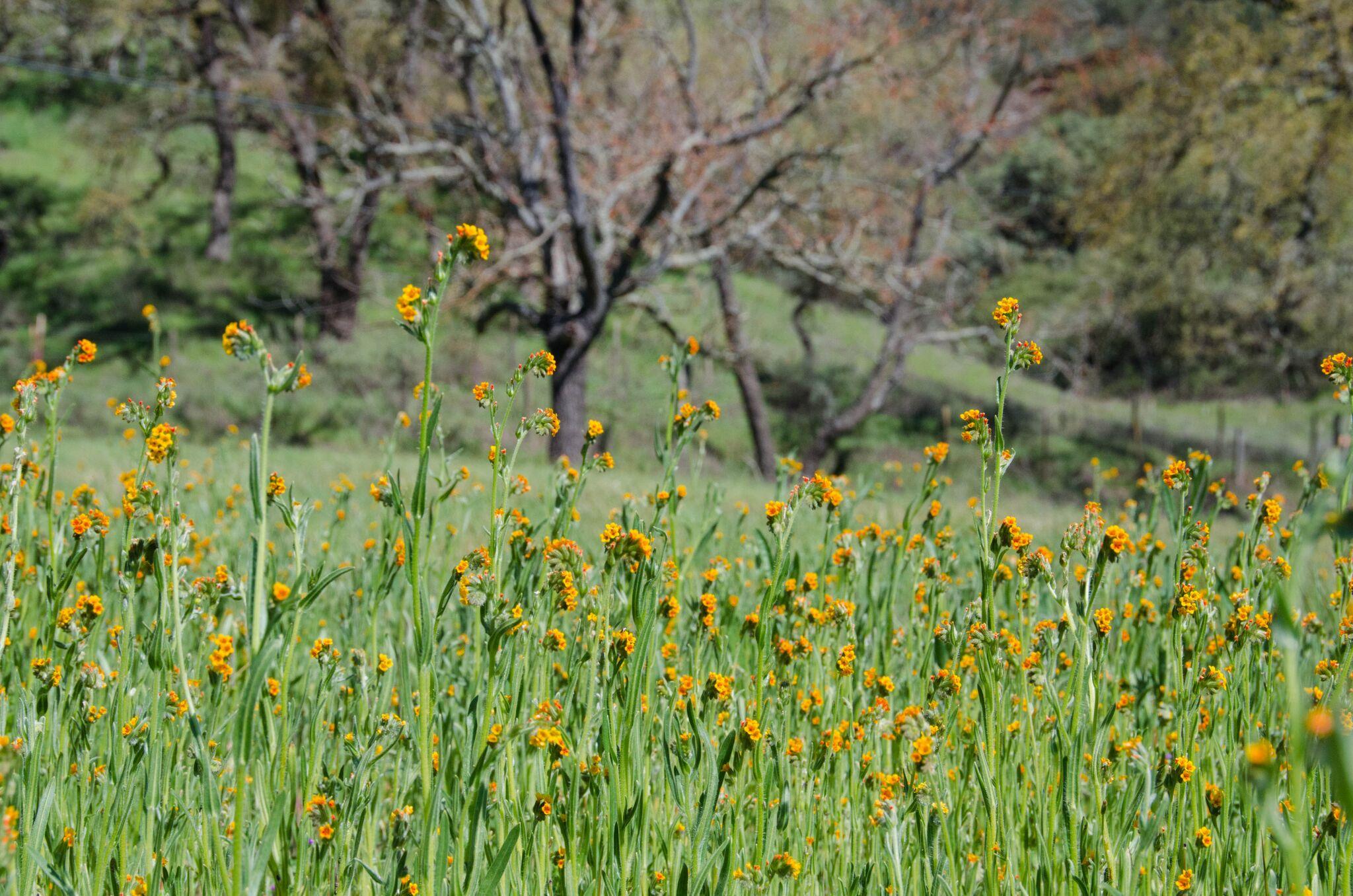 Llagas-Creek-Loop-Trail_Rancho-Canada-del-Oro-Open-Space-Preserve_Cassie-Kifer-11_preview