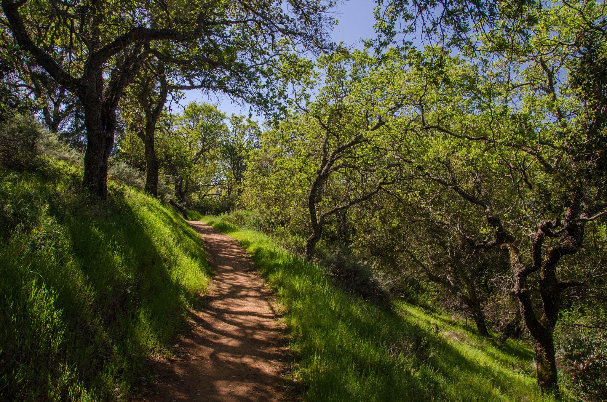 Mayfair-Trail_Rancho-Canada-del-Oro-Open-Space-Preserve_Cassie-Kifer-16_preview