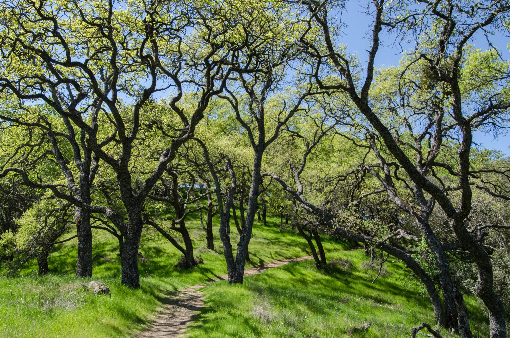Mayfair-Trail_Rancho-Canada-del-Oro-Open-Space-Preserve_Cassie-Kifer-22_preview