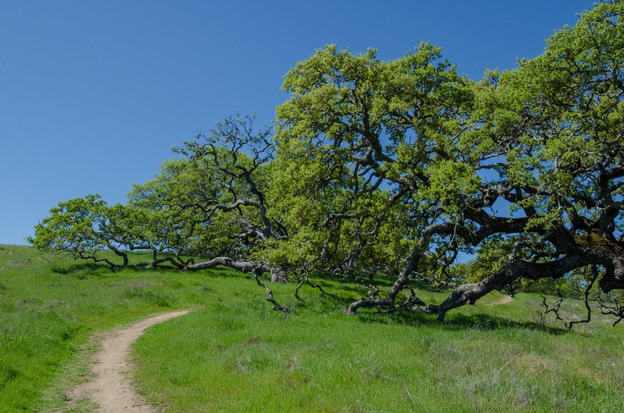 Mayfair-Trail_Rancho-Canada-del-Oro-Open-Space-Preserve_Cassie-Kifer-25_preview
