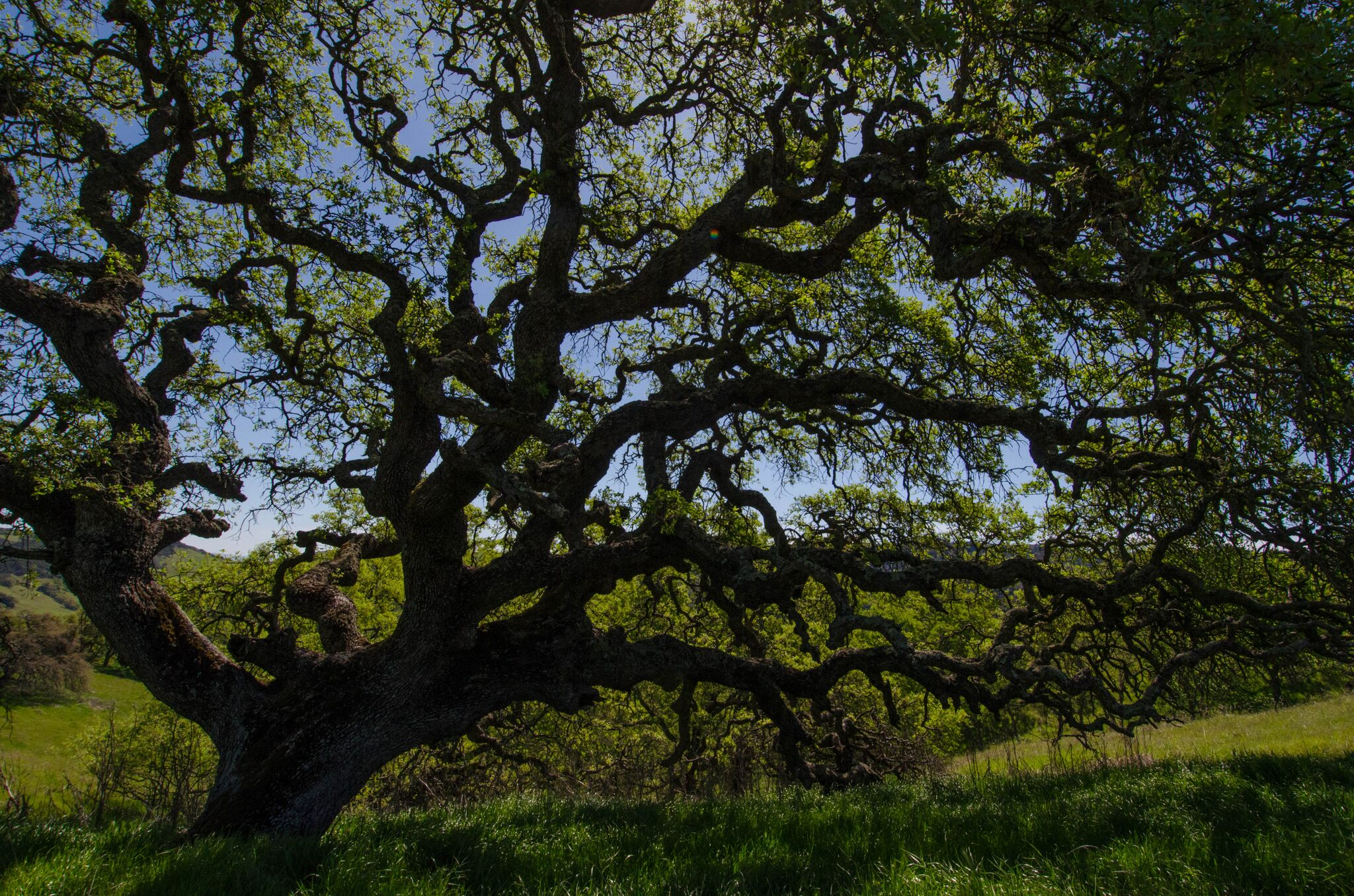 Mayfair-Trail_Rancho-Canada-del-Oro-Open-Space-Preserve_Cassie-Kifer-30_preview
