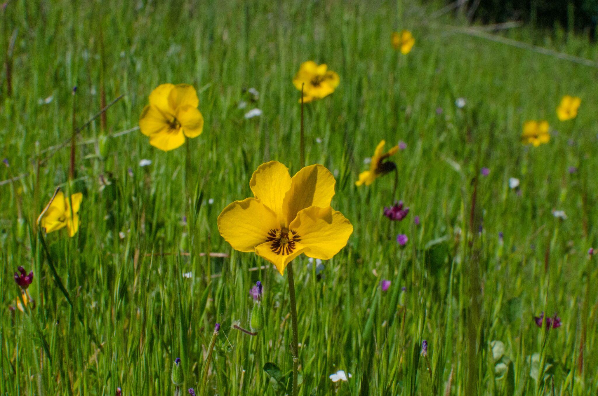 Mayfair-Trail_Rancho-Canada-del-Oro-Open-Space-Preserve_Cassie-Kifer-33