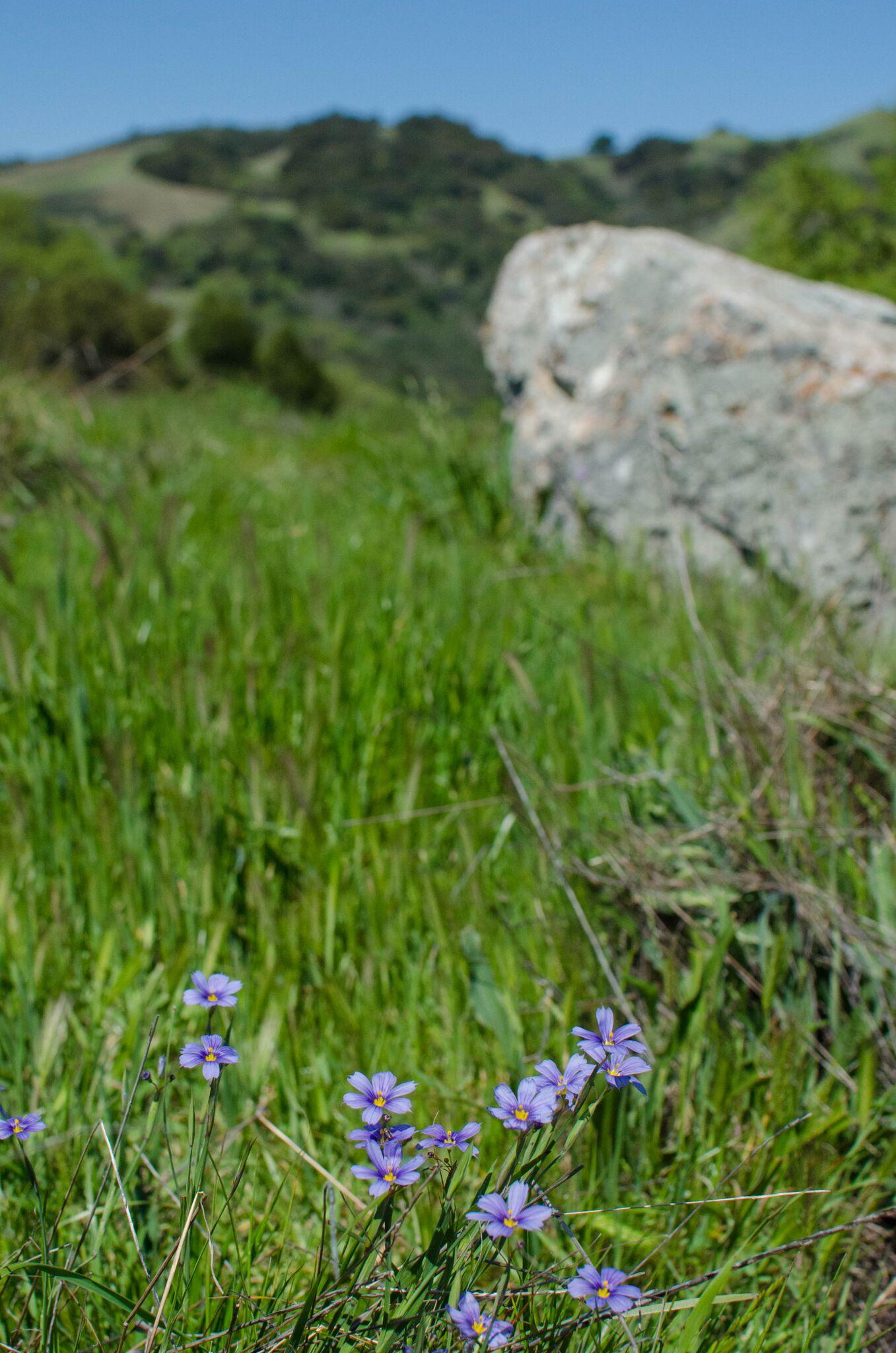 Mayfair-Trail_Rancho-Canada-del-Oro-Open-Space-Preserve_Cassie-Kifer-37_preview