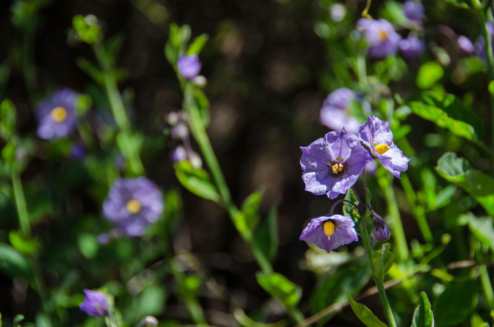 Mayfair-Trail_Rancho-Canada-del-Oro-Open-Space-Preserve_Cassie-Kifer-4_preview