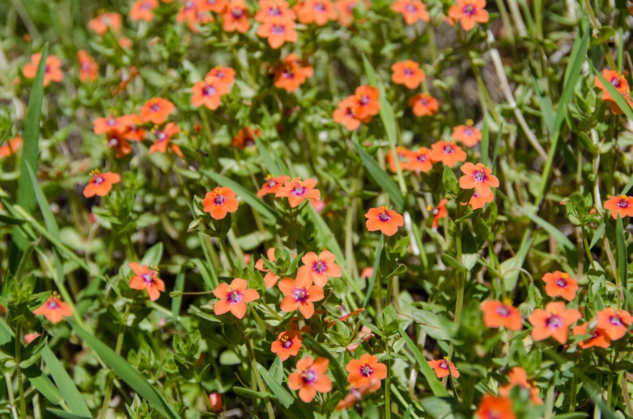 Mayfair-Trail_Rancho-Canada-del-Oro-Open-Space-Preserve_Cassie-Kifer_preview