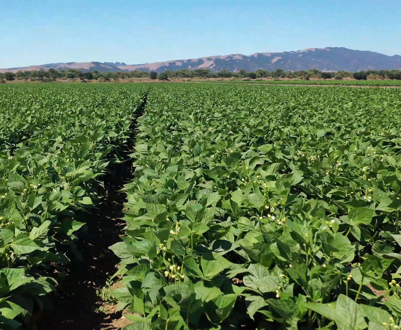 PRAP row crops-1