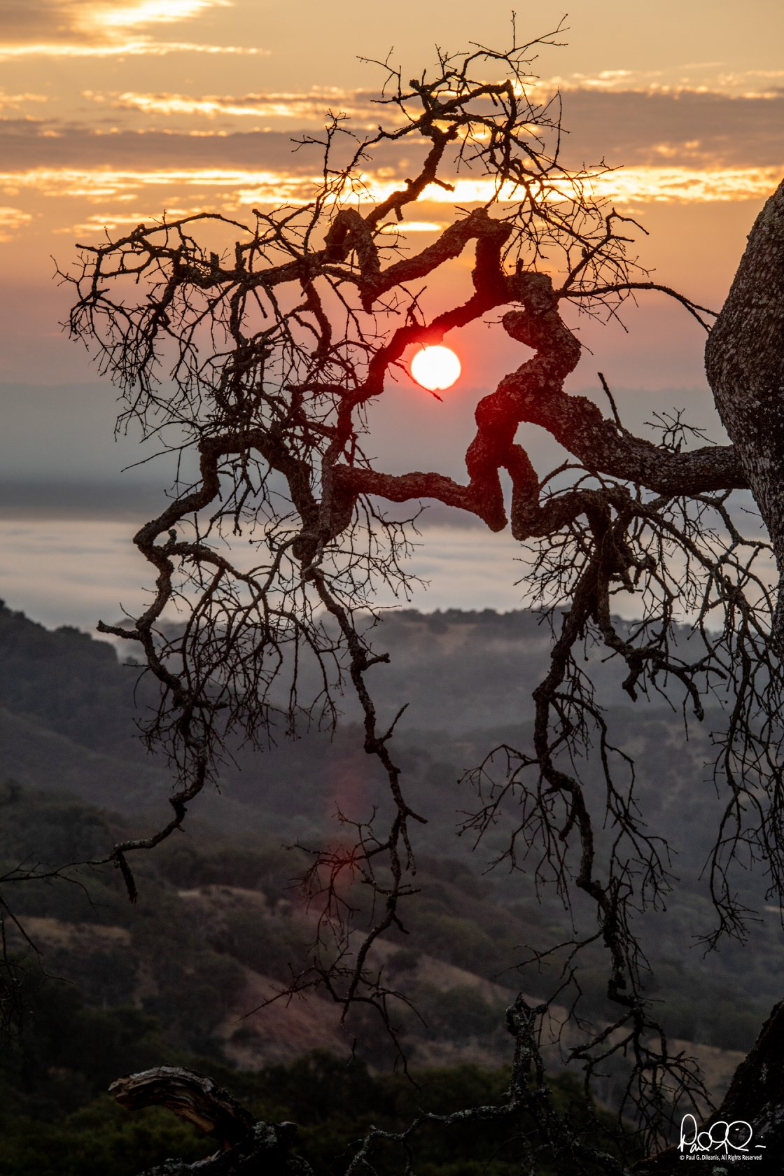 Paul Dileanis - Oak Branches on the Mayfair Ranch Trail - Rancho Canada del Oro Open Space Preserve