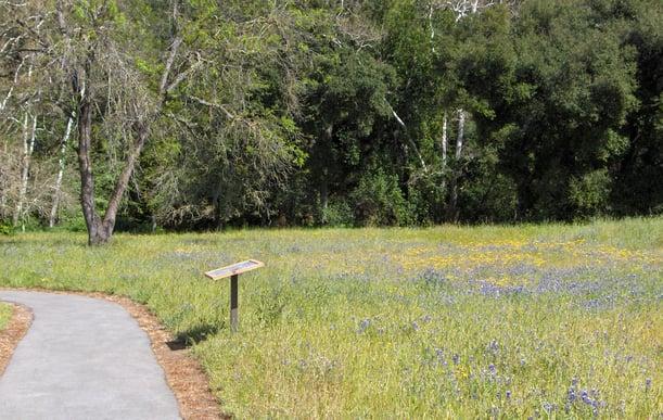 Rancho---Llagas-meadow-01---lkb---4-08-