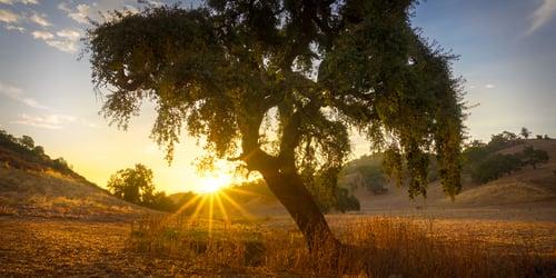 Sunrise in CV.Bill Adams