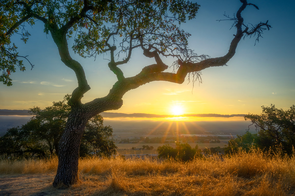 WBA_Coyote-Valley-OSP_20180722_72788_CV-sunrise-JPG1200