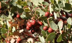 berries-600x360 CH