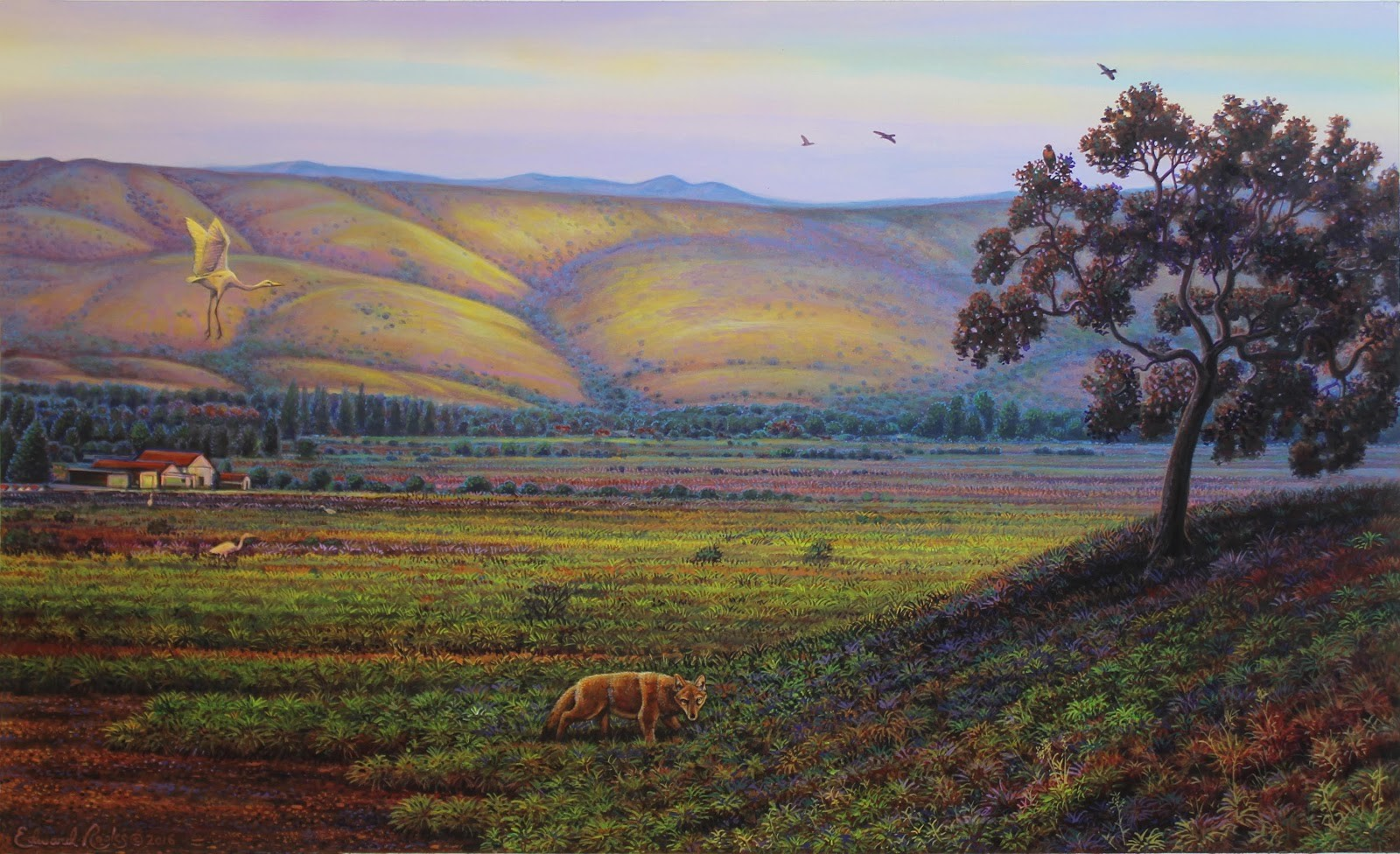ed rooks coyote valley