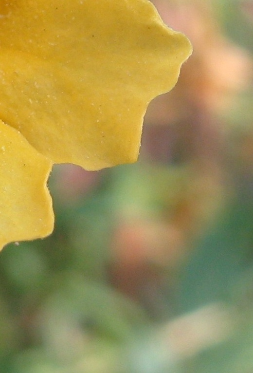 monkey flower-642920-edited.jpg