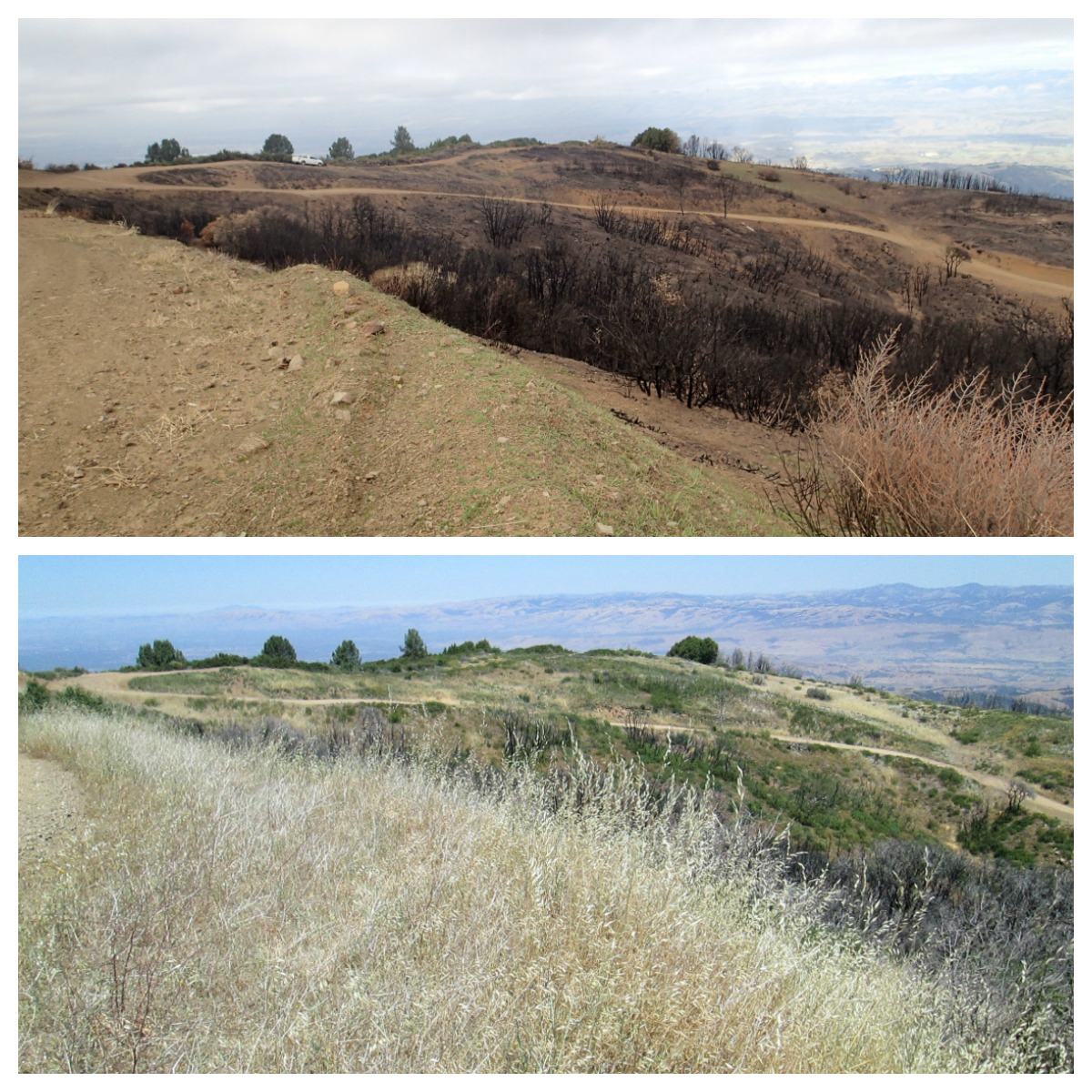 loma fire - station 7 before and after
