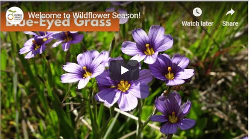 wildflower video screenshot