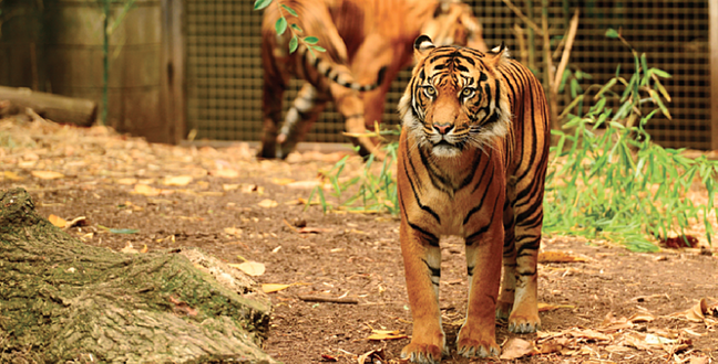 Zoos-Victoria-768x391