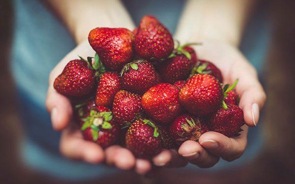 201704_strawberry-600x375