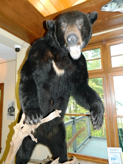 Lake Wallenpaupack Visitor Center Bear
