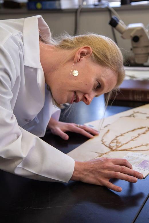 Maribeth Latvis examining Russian thistle specimen from 1880s