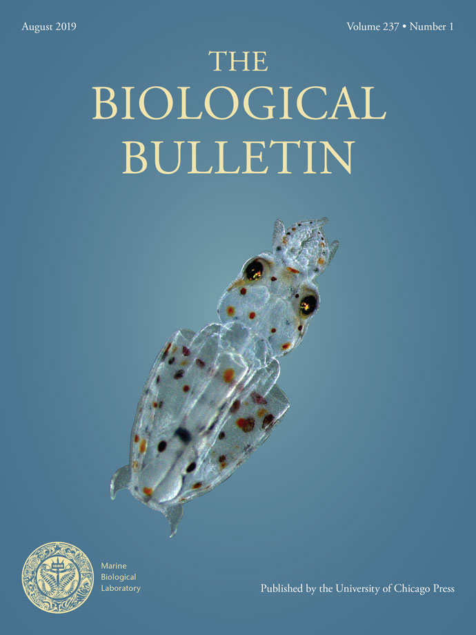 squid hatching on cover of August Biological Bulletin
