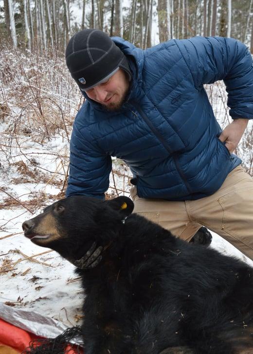 Longsinger with black bear
