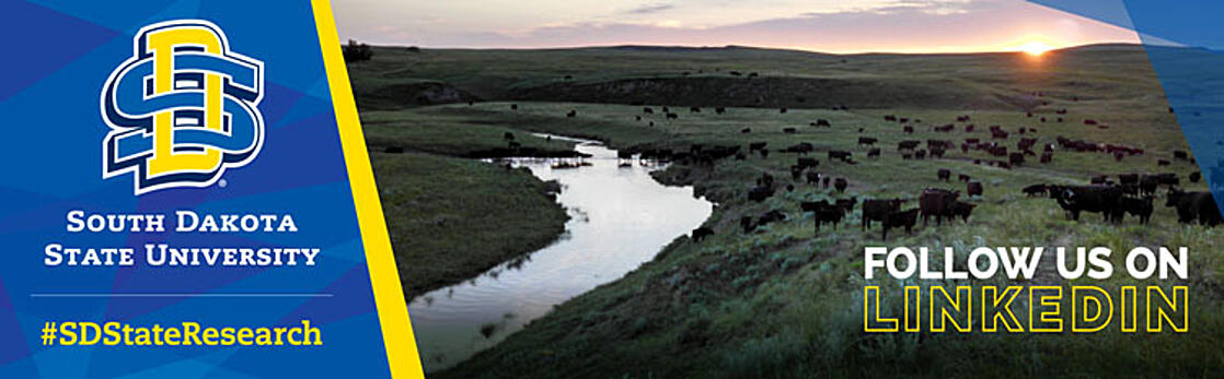 Sunset over angus cows grazing in a pasture with a stream to left