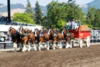 BudwieserClydesdales
