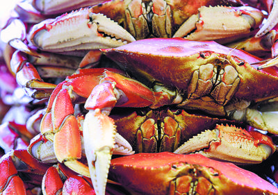Pacific Ocean Dungeness Crab